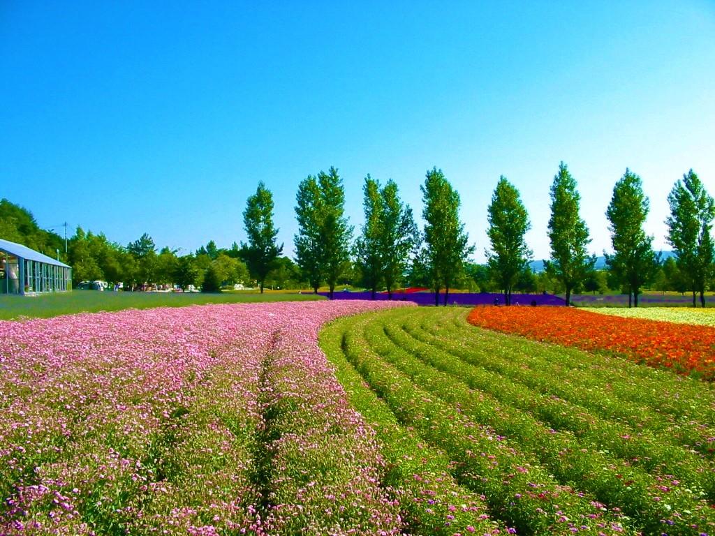 ファーム富田「花人の畑」午前