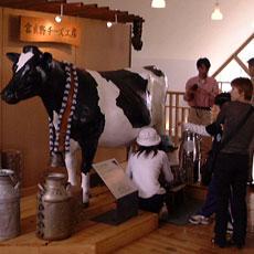 牛の乳しぼり疑似体験