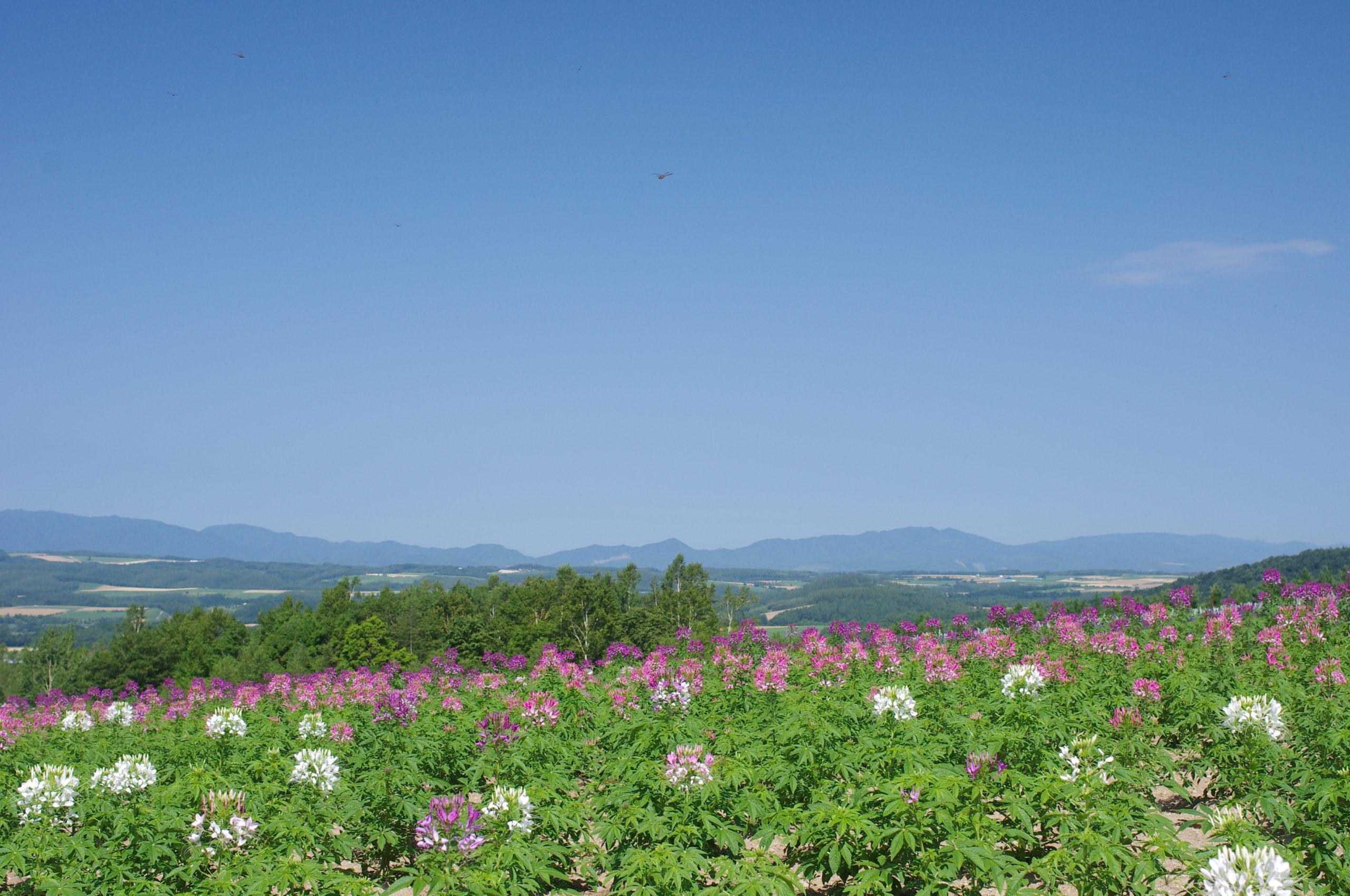 麓郷展望台から見る富良野盆地