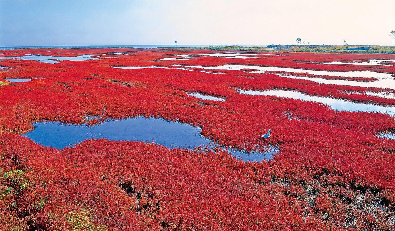 卯原内サンゴ草1