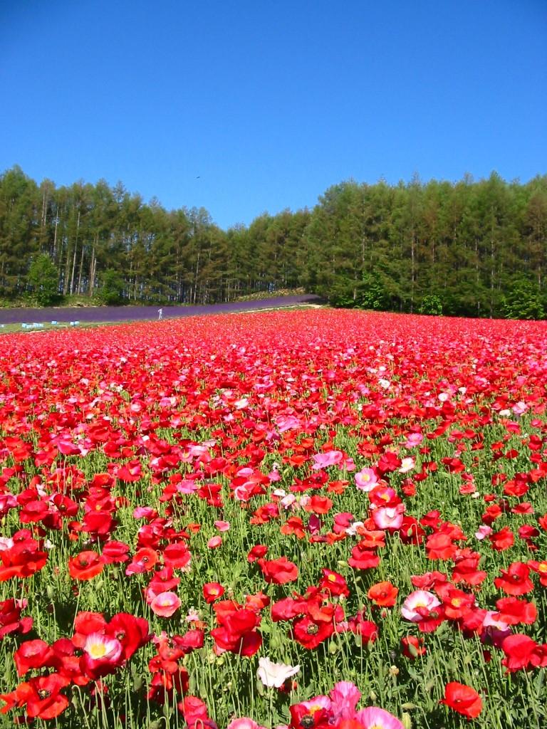 ファーム富田森の彩りの畑