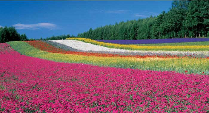 ファーム富田彩りの畑
