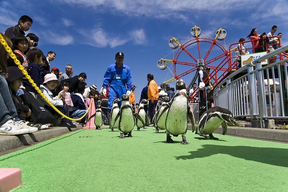 室蘭水族館のペンギン